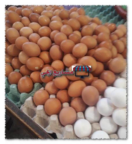 دراسة جدوى مشروع تجارة البيض