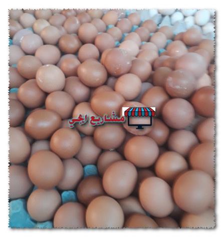 مشروع توزيع البيض على المحلات