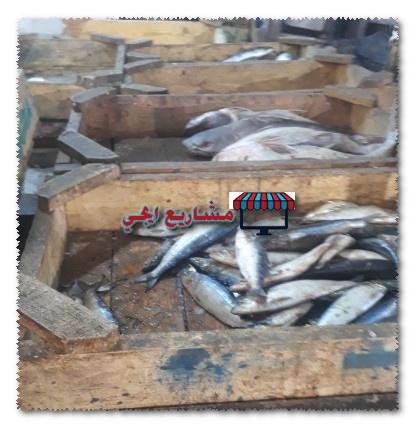 مشروع محل سمك براس مال صغير