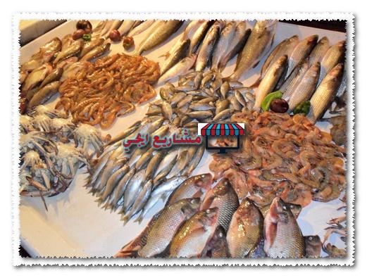 مشروع محل سمك في مصر