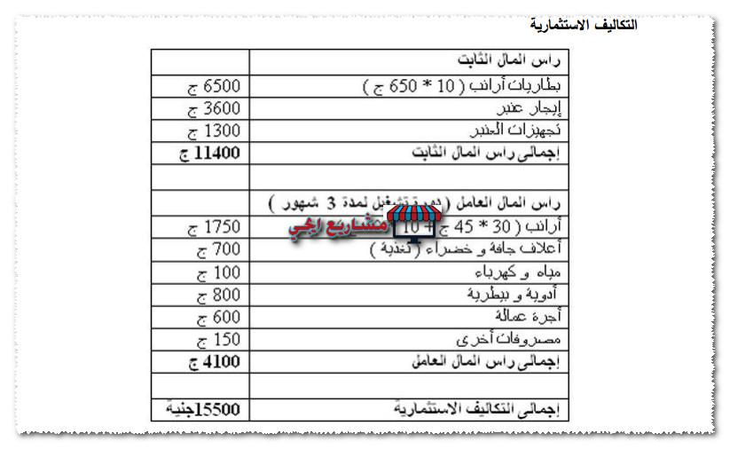 تكلفة مشروع تربية الارانب