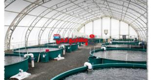 مشروع مزرعة سمك