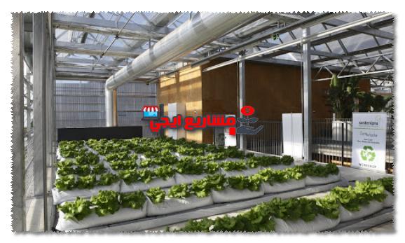 أماكن بيع الصوب الزراعية